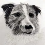 By Paul, This is a charcoal of Peggy my dads dog, member of the sefton art group, beginners art class, liverpool, maghull, southport, merseyside