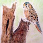 Art classes, for beginners, Ormskirk, preston, hesketh bank, Lancashire
