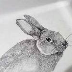 drawing of rabbit, done by member of the sefton art beginners class, crosby, southport, maghull, formby, sefton, merseyside