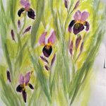 flower paintings, by Clare, member of sefton art group, atkinson art centre, southport, merseyside