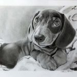 drawing of dachshund, by Let, sefton art group, art class, liverpool, hightown, merseyside