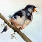 watercolour painting of a bird, sefton art group, art classes for beginners, learn to draw and paint, merseyside,